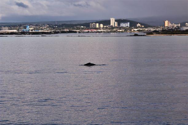 Honolulu whale watching 2.JPG
