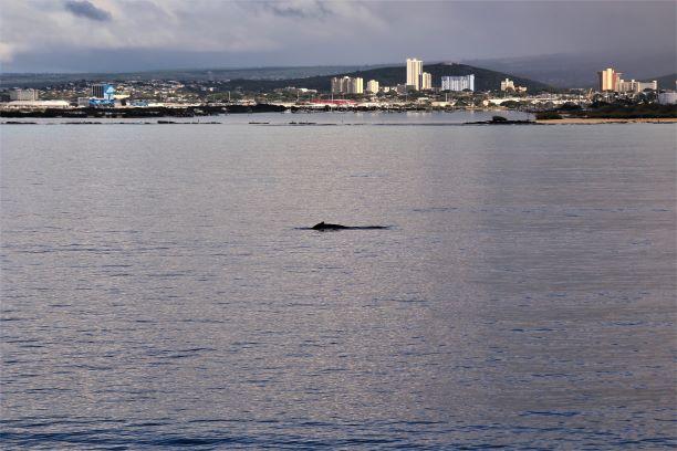 Honolulu whale watching 3.JPG
