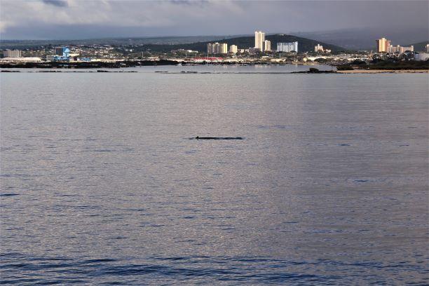 Honolulu whale watching 4.JPG