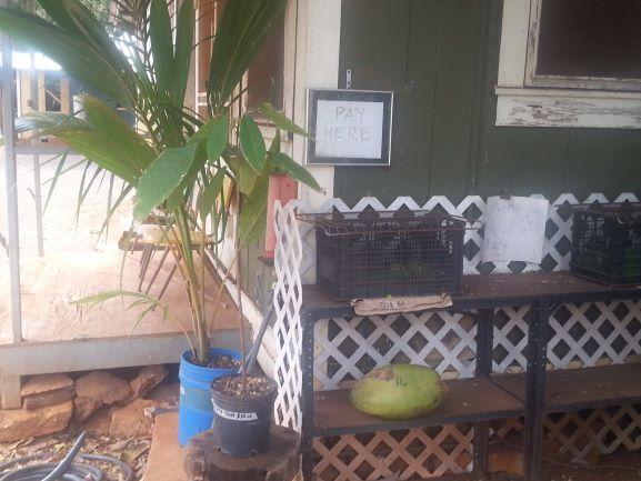 Fruit and a cacao tree for sale outside the Taro Ko Chips Factory, Hanapepe, Kauai