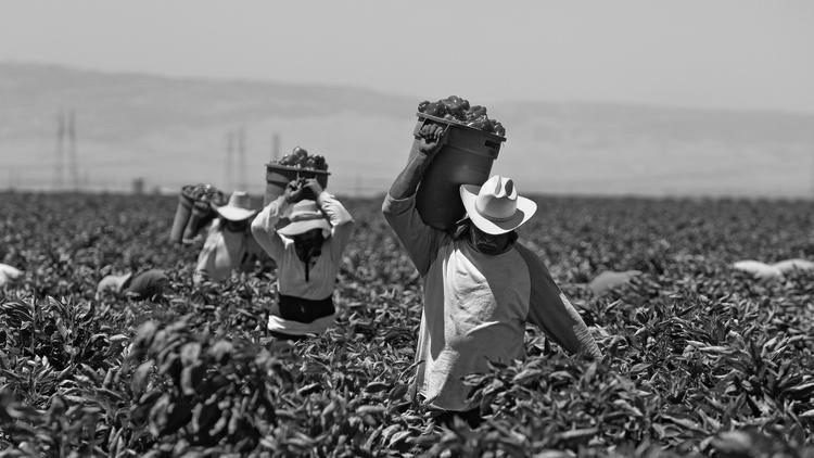 Trabajo Agrícola / Agricultura