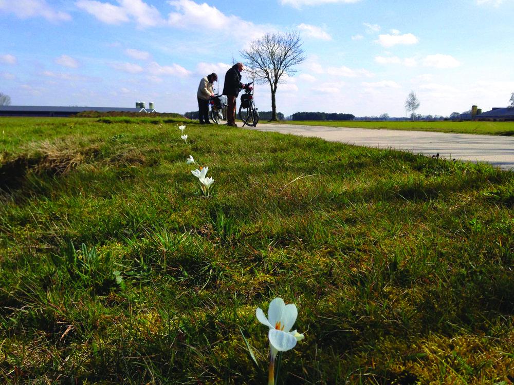 krokussen met fietsers groener.jpg