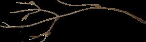 twig-2.png