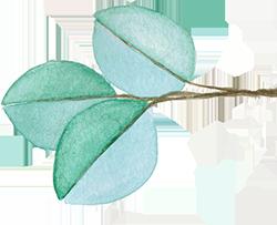 eucalyptus-1.png