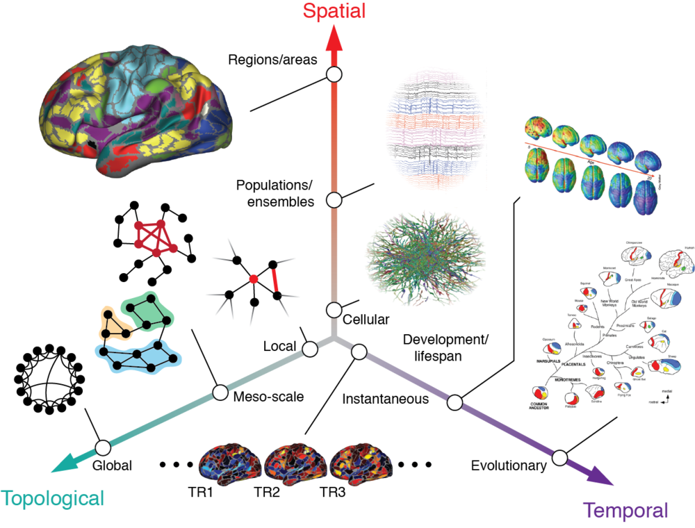 Research - Our work involves analysis of network data at different spatial, temporal, and topological scales. Our goal is to understand the underlying principles that shape the organization and function of biological neural networks.