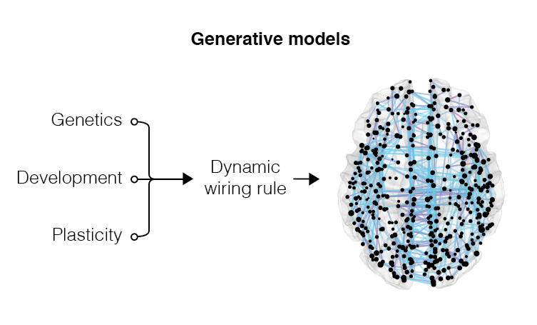 Brain networks grow and evolve over time. This developmental process is the result of a multitude of factors that combine to generate a mature network with functionally adaptive topological properties. We aim to invert this process and uncover the wiring rules and organizational principles that guide brain network development. To this end, we build generative models that realize simple mechanisms of brain network growth and compare the synthetic networks generated by models with empirical observations.