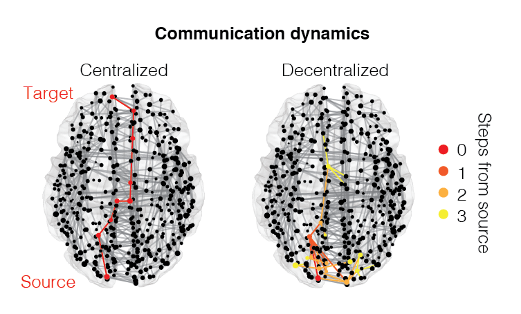 What routing policy does the brain use to transmit signals and information from one brain area to another? Can these policies be passive and decentralized or do they require top-down, centralized control? We simulate different routing policies, which allows us to explore their advantages and disadvantages, identify tradeoffs, and to develop theories of large-scale inter-areal communication.