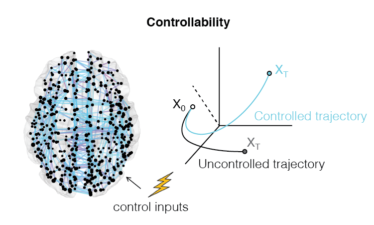 Network controllability is a theoretical framework for investigating how time-varying input signals influence the trajectory of a networked dynamical system as it moves through a high-dimensional state space. We apply this framework to biological neural networks to gain insight into the topological properties that support transitions between distinct network states and the energetic cost of driving the network along a desired trajectory towards a target state.