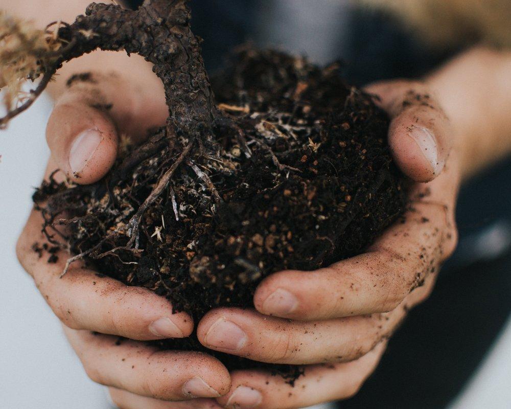 kompost_Feb.jpg