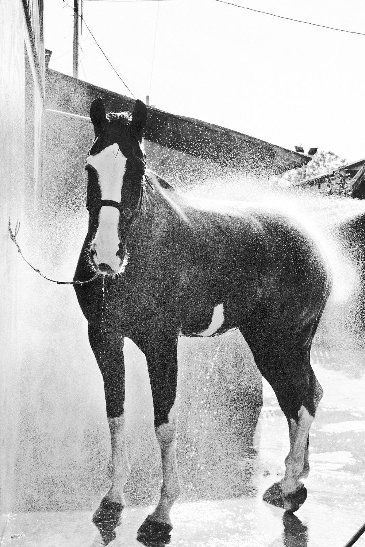 ArzichdaGama_Horses and Equine photography Black&White (14).jpg