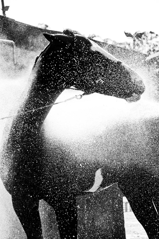 ArzichdaGama_Horses and Equine photography Black&White (12).jpg