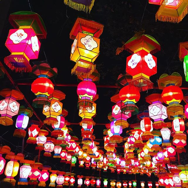 If you haven't visited yet- The Cary Chinese Lantern Festival is the perfect evening out! Get your spiked Hot chocolate and walk around to see all the beautiful displays 🤩🏮. Perfect for a romantic date or a fun experience for the kiddos! . . . #weheartcary #cary #carync #downtowncary #boothamphitheatre #local #smalltown #chineselanternfestival #chineselanterns #rdu #raleigh #durham #raleighdurham #apexnc #apex #downtownapex