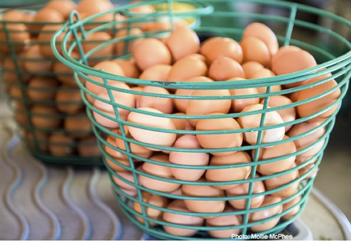 500eggshare.png