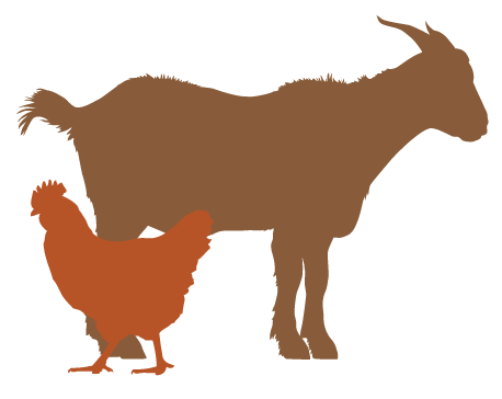 chickengoat.png