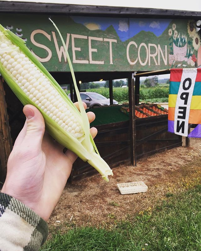 White corn is here and there is no telling how long it'll last the stand on the corner of 75th and Valmont is open today until 6. 🌽🌽 #whitecorn #sweetcorn #munsonfarmsboulder #bcfm