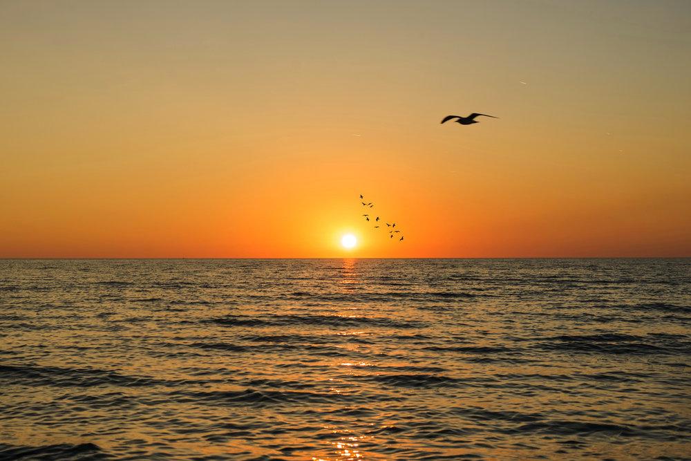 Birds sunset Final .jpg