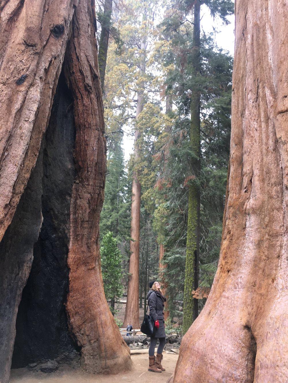 moon body soul in sequoia.jpg