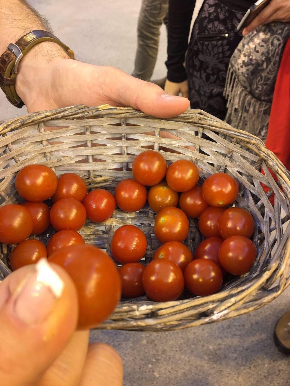 fridheimar tomatoes iceland.JPG