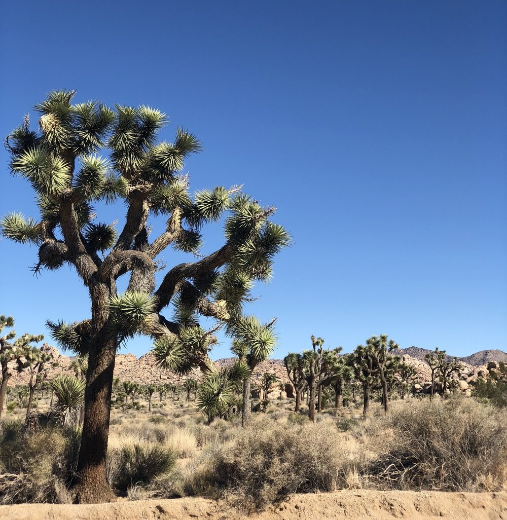 a perfect 48 hours in joshua tree.JPG