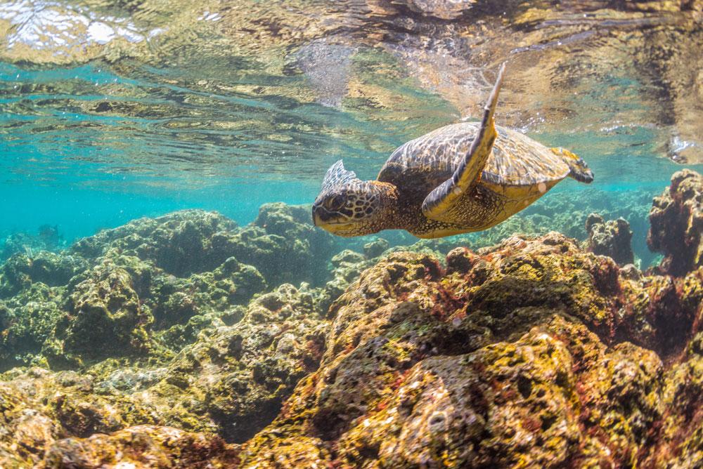 kauai-snorkel.jpg