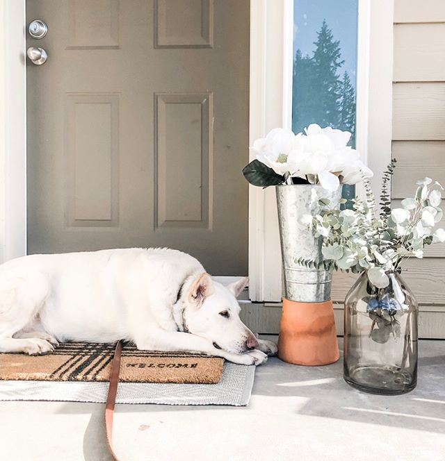 For this #fridayintroductions, meet Hudson!⠀⠀⠀⠀⠀⠀⠀⠀⠀ ⠀⠀⠀⠀⠀⠀⠀⠀⠀ Fun fact about me irl, I've got three rescue pups. You can see some snapshots of all of them under the hashtag #garriottpupstagram 🙈⠀⠀⠀⠀⠀⠀⠀⠀⠀ ⠀⠀⠀⠀⠀⠀⠀⠀⠀ Hudson is my 4yr old white German Shepherd. He loves playing secretary to me during the day and lounging on the porch in the evenings.⠀⠀⠀⠀⠀⠀⠀⠀⠀ ⠀⠀⠀⠀⠀⠀⠀⠀⠀ At 90lbs we're almost the same size, but he's just a big (very fluffy) puppy. He naps with his toy fish most of the day but he's also always a good sport when it comes to burning some energy with his two little sisters in the backyard.⠀⠀⠀⠀⠀⠀⠀⠀⠀ .⠀⠀⠀⠀⠀⠀⠀⠀⠀ .⠀⠀⠀⠀⠀⠀⠀⠀⠀ .⠀⠀⠀⠀⠀⠀⠀⠀⠀ .⠀⠀⠀⠀⠀⠀⠀⠀⠀ .⠀⠀⠀⠀⠀⠀⠀⠀⠀ .⠀⠀⠀⠀⠀⠀⠀⠀⠀ #gsd #whitegsd #germanshepherd #whitegsd #pnwpups #hudsongarriott #garriottpupstagram #rescueismyfavoritebreed #adoptdontshop  #madeintacoma #gritcity #sayyestosuccess #businessinspiration #buildingmybrand #wearethemakers #createdtobecreative #tacomadesigner #tacomawa #brandingstudio #designstudio