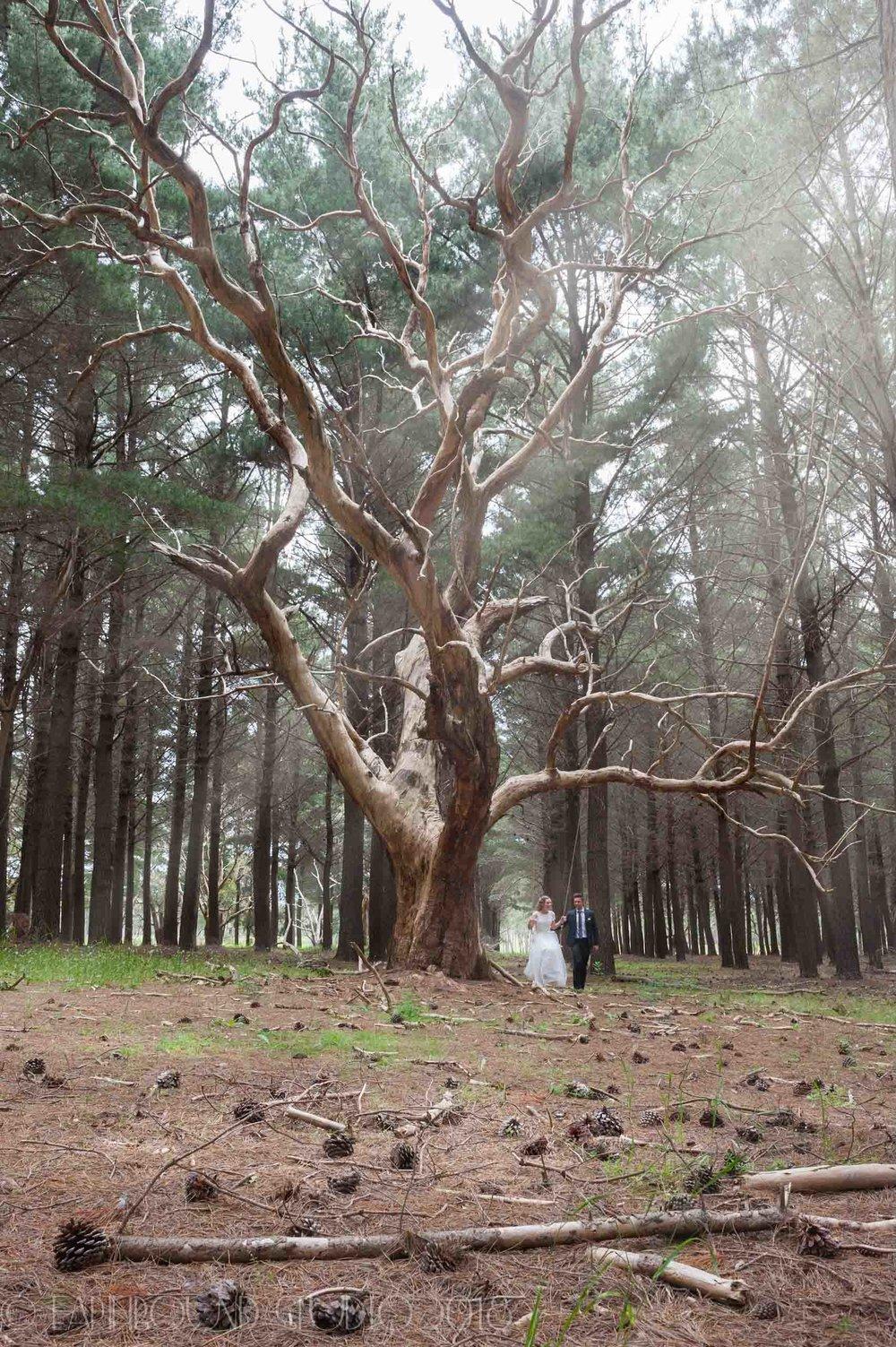 20161121-165411Joel&Bella_Wedding-Edit.jpg