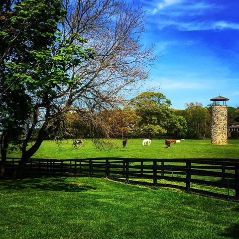 Long Island Horse Farm