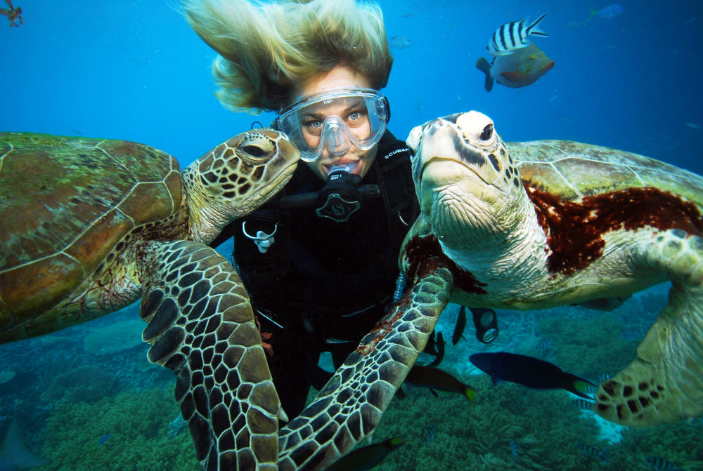 diver and turtles at moore reef.jpg