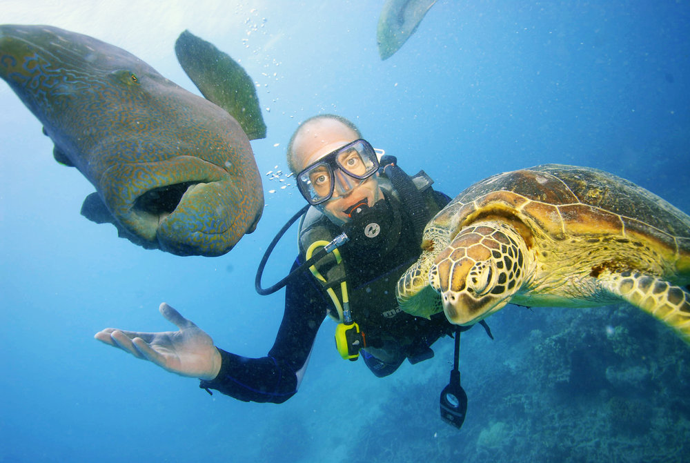 diver at Moore Reef with turtle and Maori wrasse.jpg