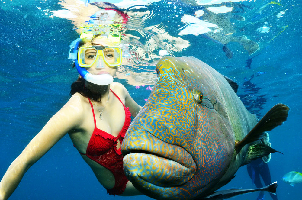 wally-the-maori-wrasse-and-snorkeller.jpg