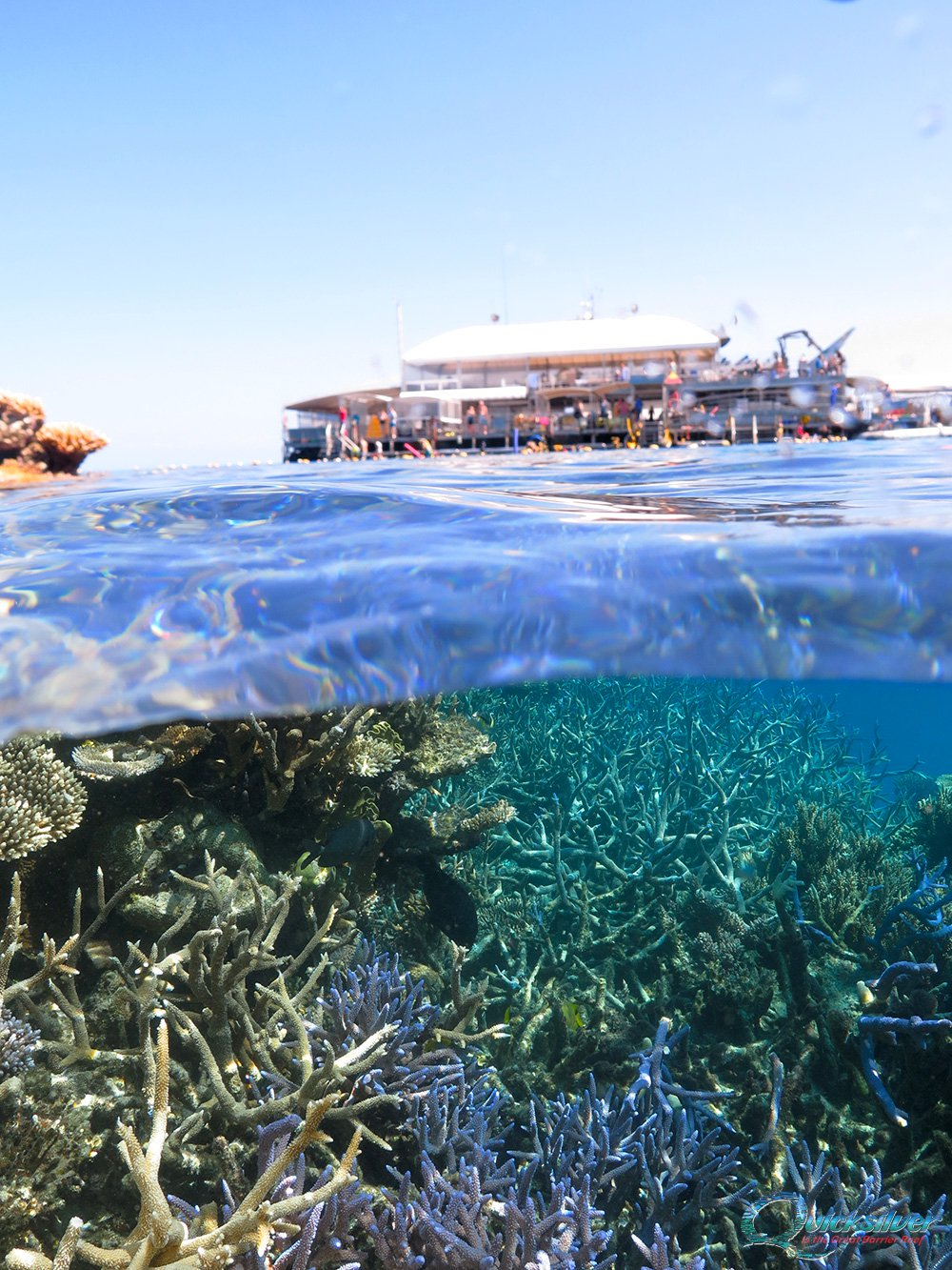Agincourt-outer-barrier-reef-pontoon-platform-inbg.jpg