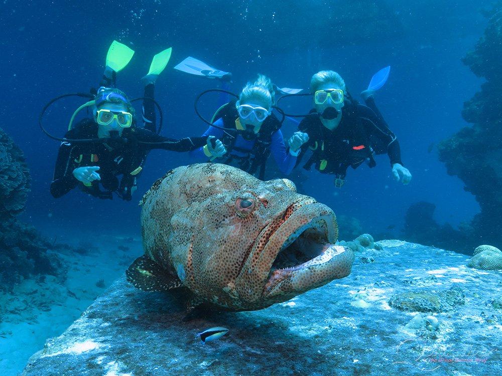 outer-barrier-reef-pontoon-platform-learn-to-dive-big-fish.jpg
