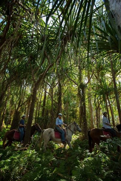 Horse rainforest 2.JPG