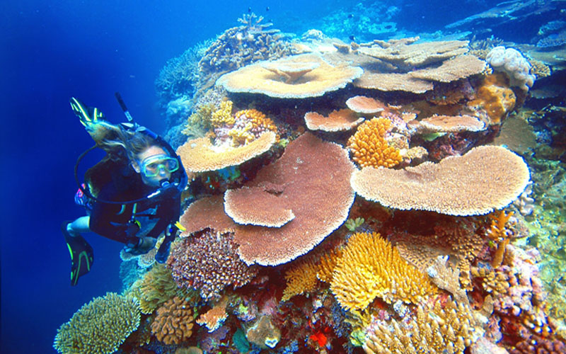 diver-and-corals.jpg