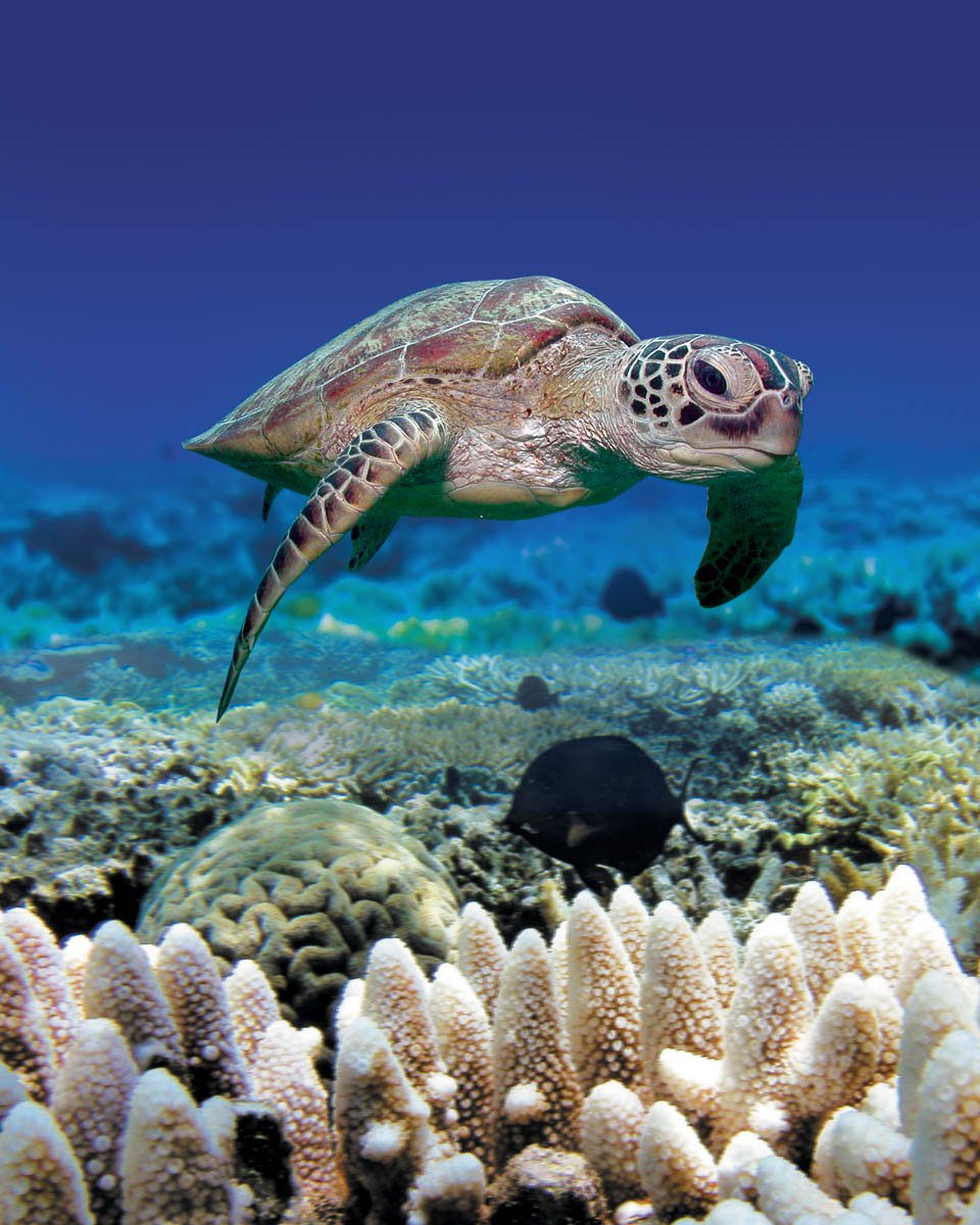 obr-tour-outer-reef-marinelife-07.jpg
