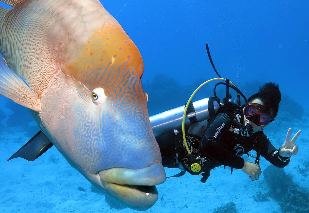 gagi-tour-outer-reef-cairns-09.jpg