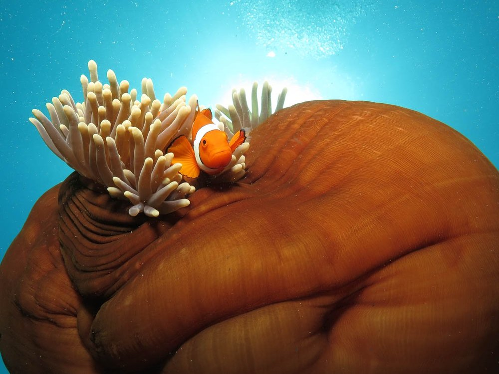 obr-tour-outer-reef-marinelife-24.jpg