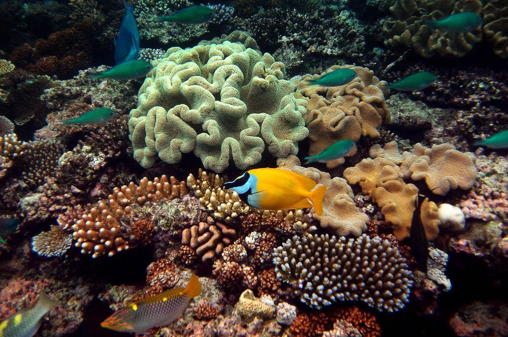 obr-tour-outer-reef-marinelife-08.jpg