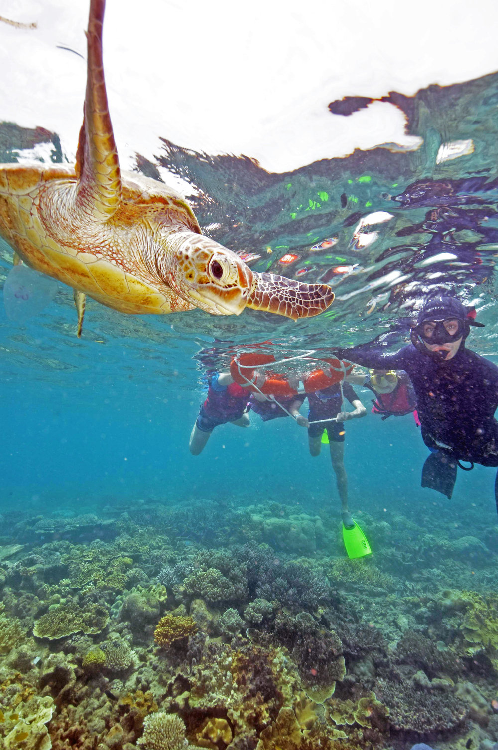 guided-snorkel-tour-moore-reef.jpg