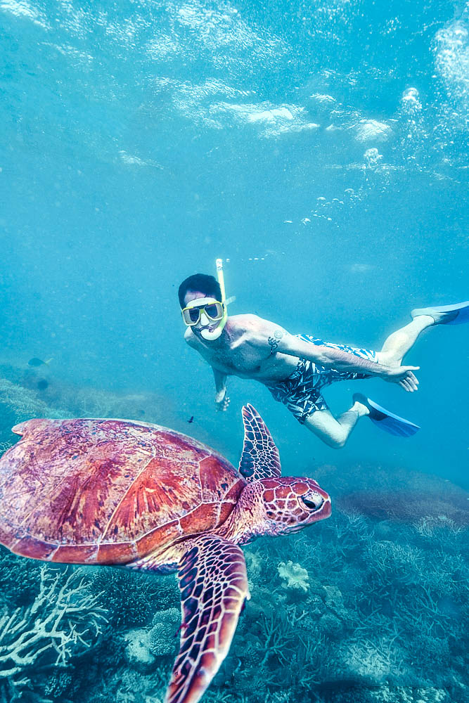 snorkeller-and-turtle-at-moore-reef.jpg