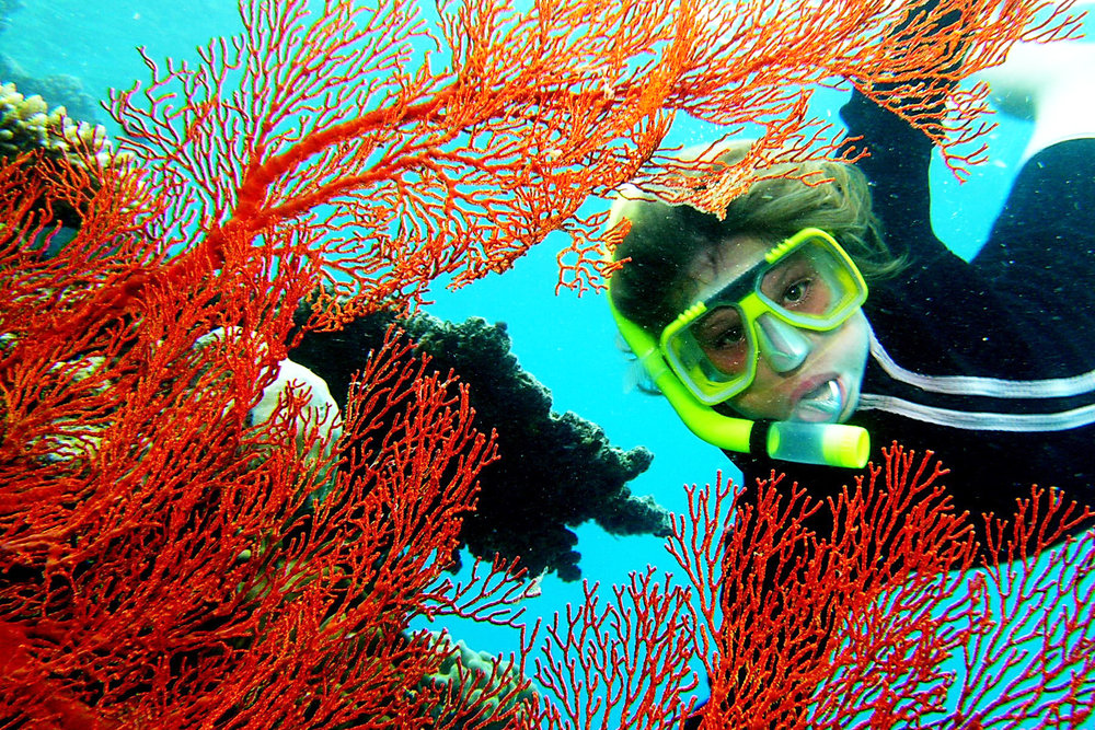 snorkeller-and-fan-coral.jpg