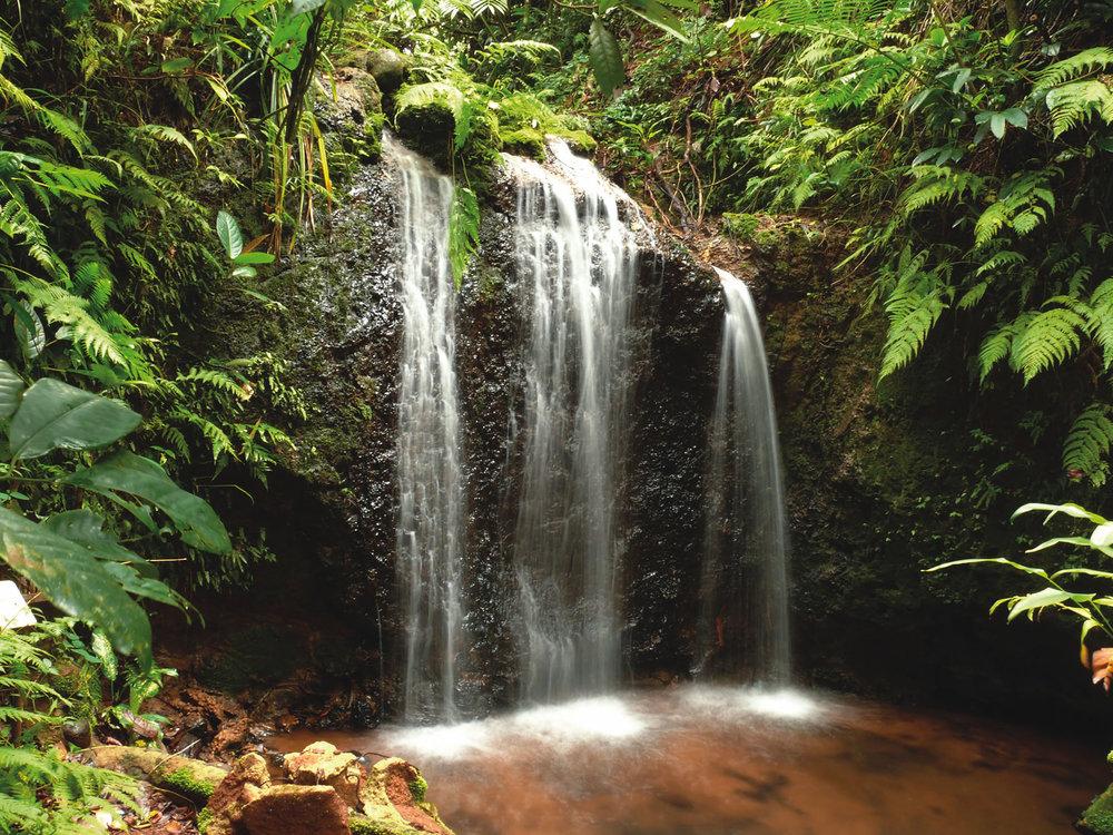Teresa Falls at Paronella Park  http://www.paronellapark.com.au/media-paronella/downloads