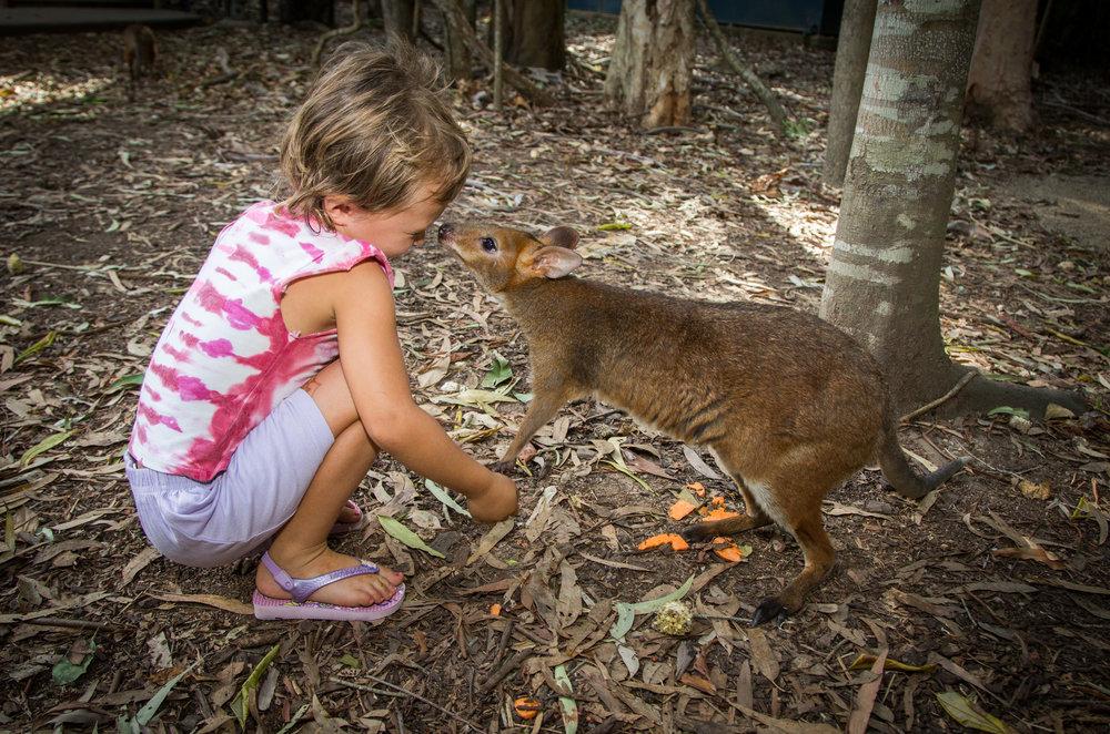 Wallaby kiss.jpg