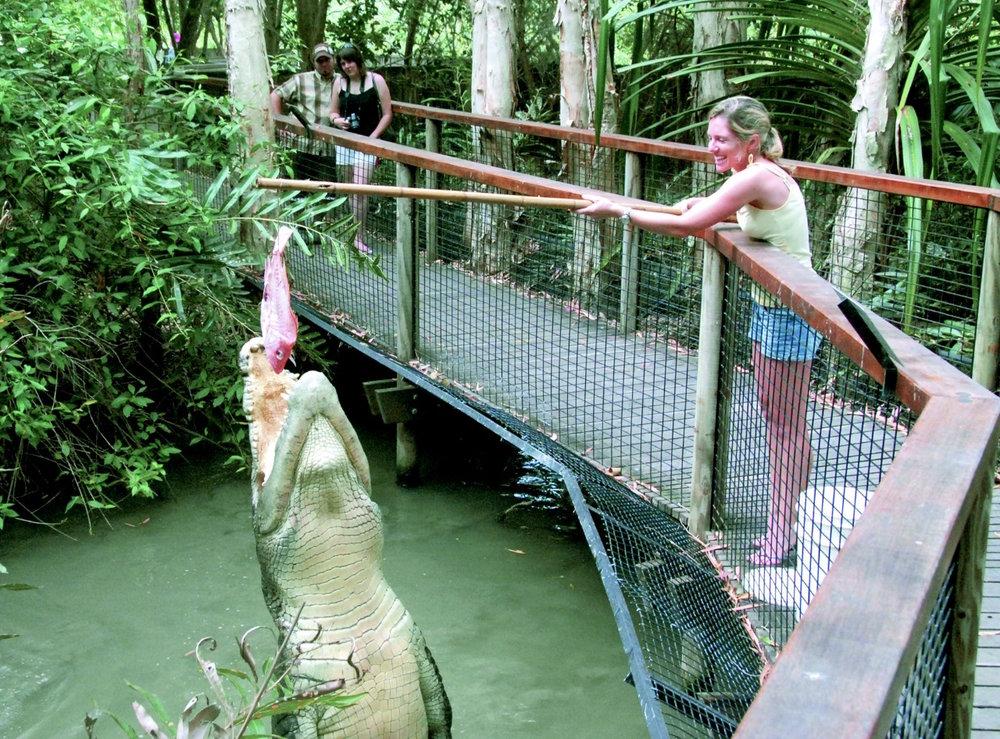 feeding-a-crocodile-at-hartleys-20083_1280x946.jpg