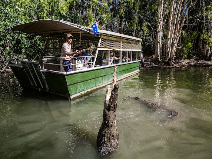 HARTLEY'S CROCODILE ADVENTURES - Discover the Australian wildlife such as snakes, cassowaries, koalas, crocodiles, quolls and much more at Hartley's Crodocile Adventures!Price $76〜