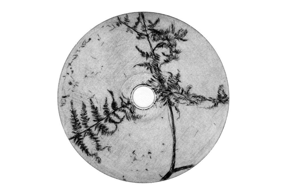 Fougères - pointe sèche sur CD-Rom