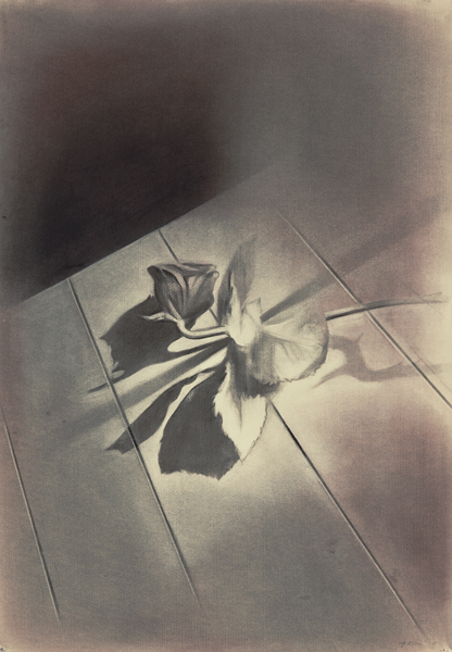 A rose is a rose is a rose is a rose III, 2013 Charcoal on paper, 100 x 50 cm