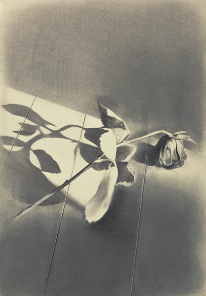A rose i a rose is a rose is a rose I, 2013 Charcoal on paper, 100 x 50 cm