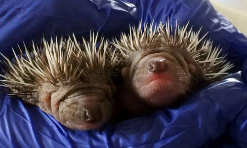 Tiny Twins