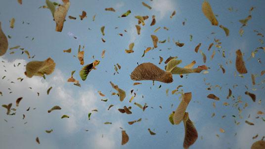 'Falling' video piece by Neeta Madahar